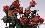К чему снятся цветы: толкование по различным сонникам для мужчин и женщин