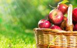 Яблочный спас: история праздника, народные обычаи и традиции