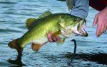 К чему снится рыбак: толкование в различных сонниках