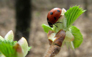 К чему снятся насекомые: толкование сна по различным сонникам для мужчин и женщин