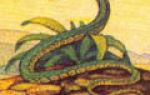 Знак змея (чикчан) по гороскопу майя