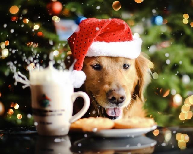 Меню на новогодний стол 2018 года: что приготовить и подать в год Собаки