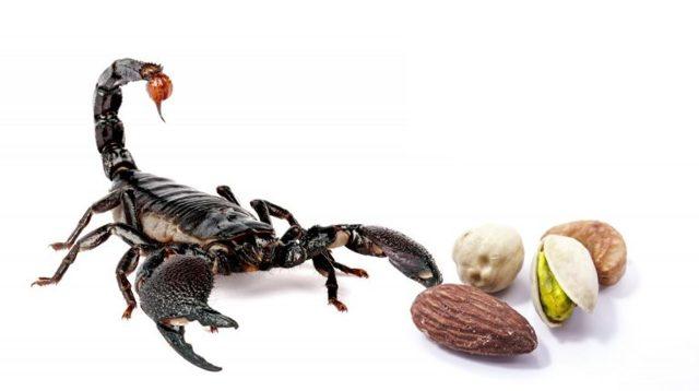 Гороскоп питания Скорпиона: любимая еда и кулинарные привычки