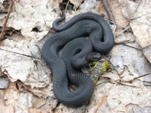 Что значит если вы увидели во сне много змей к чему это: что это означает