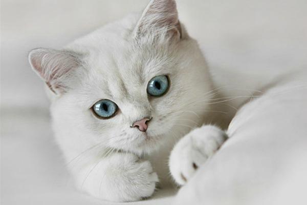 Что значит если вы увидели во сне много кошек: толкование сновидения