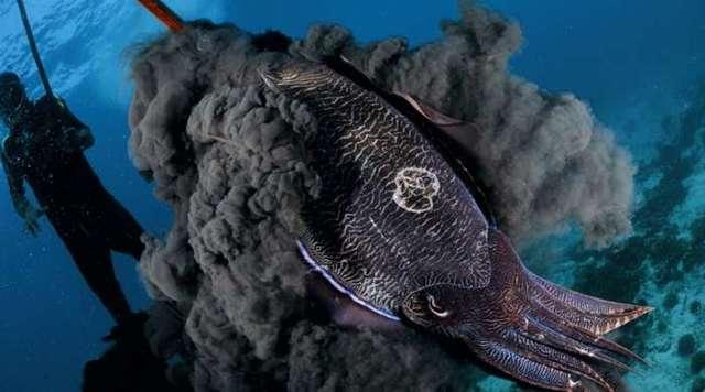 Учеными найдена неопознанная «мохнатая» рыба