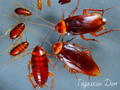 Заговоры от тараканов: 9 эффективных способов избавиться от них навсегда