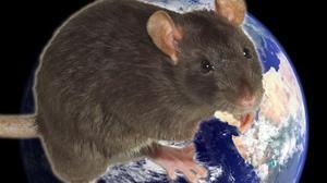 1960 год по восточному календарю: год  Металлической Крысы