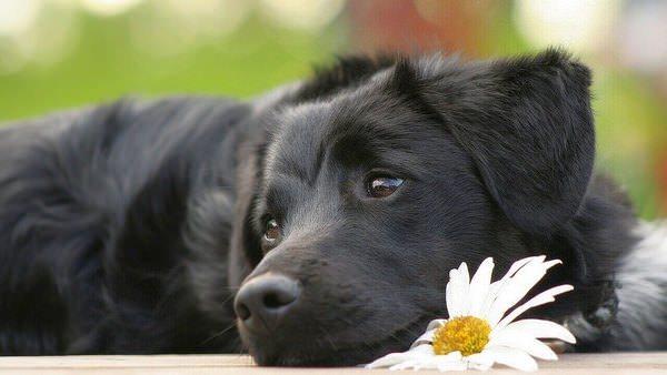 Увидеть во сне большую черную собаку: к чему это?