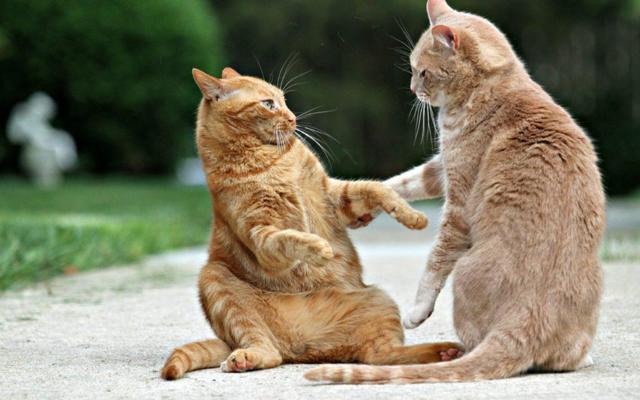 Что означает увидеть во сне много кошек и котят: толкование в разных сонниках
