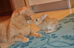 Гороскоп на январь 2020 год Кролик (Кот)