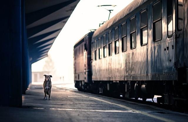 Кчему снится боятся поезда